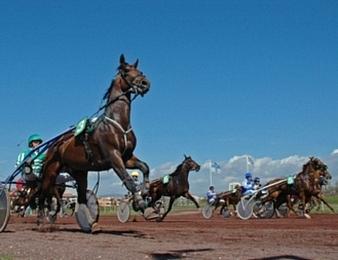 Aladin d'Ecajeul a fait sien le Critérium de Vitesse de Basse-Normandie