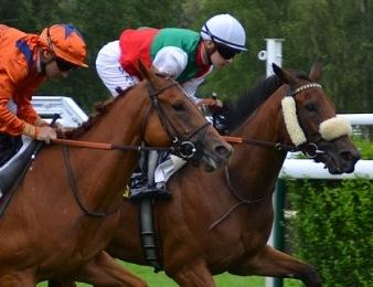 Deux cavalier au coude à coude dans une course de quinté plus