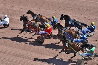 Quinze concurrents ont rendez-vous dans le Tiercé, Quarté, Quinté du jour
