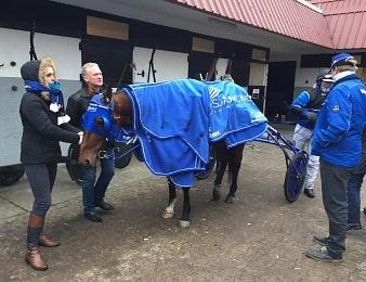 Timoko devient le cheval français le plus riche de l'histoire.